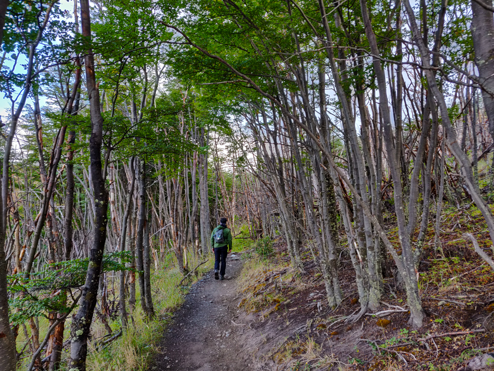 Lightly forested trail leading away from Laguna Los Patos