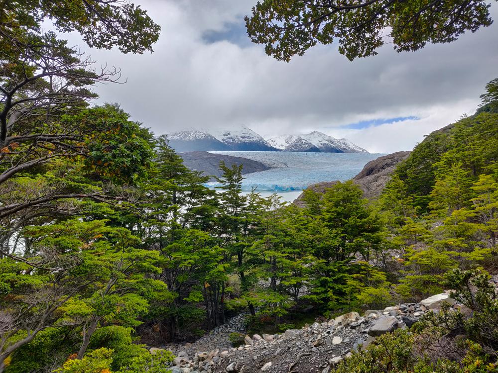 Slightly closer view of Grey Glacier from below the suspension bridge