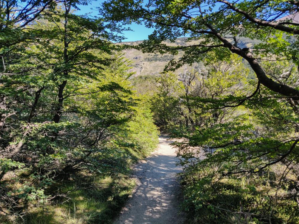 Tree-shaded trail