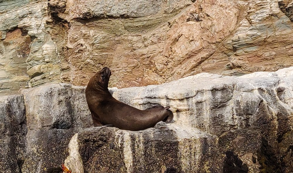 Sea lion lounging on the rocks