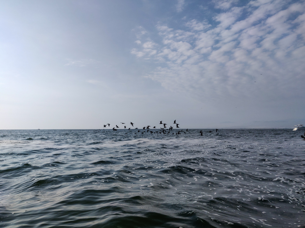 A flock of birds flying out across the water