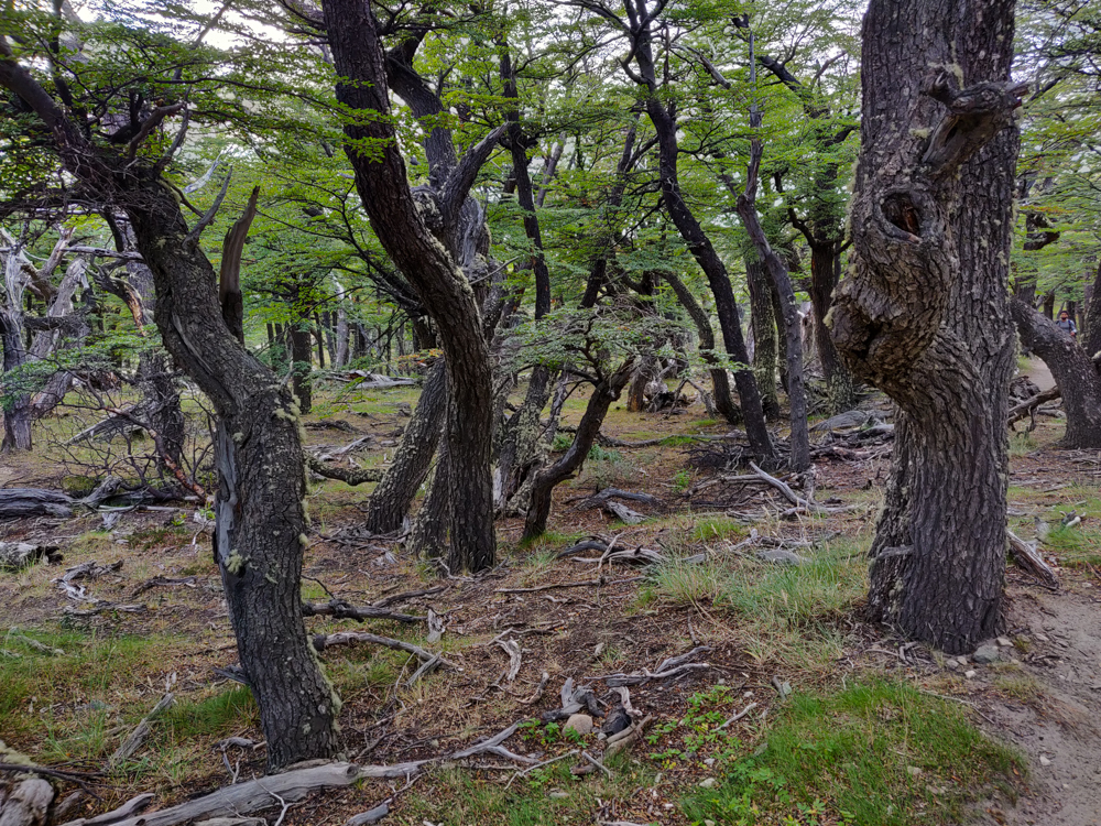 Gnarled forest along the way