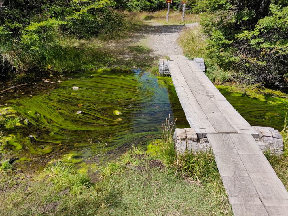Streaks of algae in the river