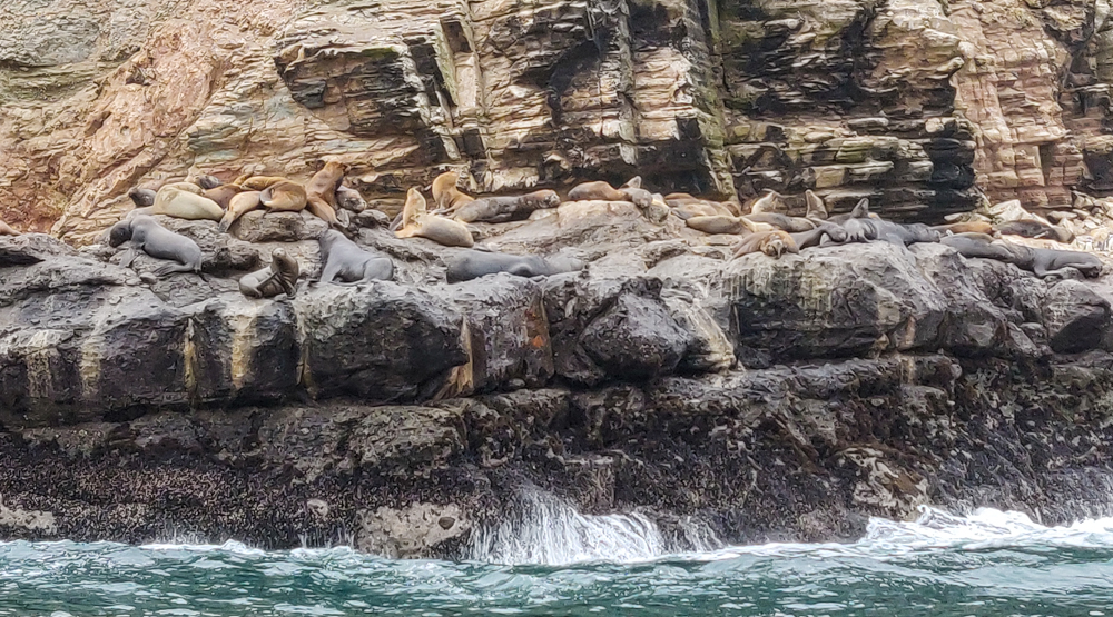 Sea lions flopped on the rocks