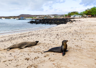 Welcome to the Galapagos Islands!