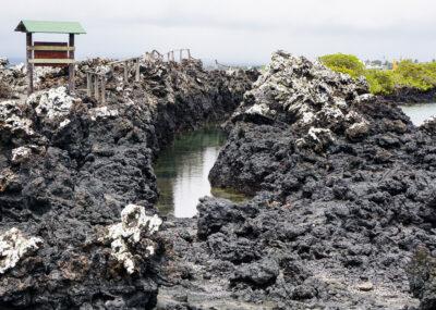 Isabela Island – Las Tintoreras